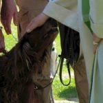 Hundesegnung im Huga am 5. Juni 2016. (Foto: Iris Raemisch)